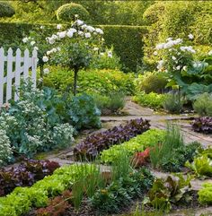 Geometric Garden    Colorful rows of salad crops and the bold foliage of rhubarb enhance this garden set in a geometric pattern.