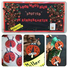 """Look who's been """"spotted"""" in Kindergarten! Insect Crafts, Bug Crafts, Daycare Crafts, Preschool Crafts, Crafts To Make, Crafts For Kids, Kindergarten Classroom, Classroom Decor, Ladybug Bulletin Boards"""