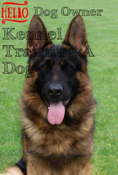 Use These Tips To Help Your Kennel Training A Dog ** Want to know more, click on the image. Kennel Training A Dog, Crate Training, Dog Training Tips, Stress And Anxiety, Dog Owners, Stuff To Do, Have Fun, Puppies, Dogs