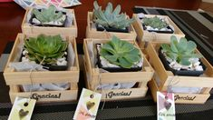 New Wedding Favors For Guests Top 10 Martha Stewart Ideas Succulent Gifts, Wedding Favors For Guests, Ideas Para Fiestas, Cactus Y Suculentas, Deco Table, Succulents Garden, Flower Pots, Diy And Crafts, Projects To Try