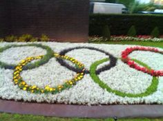 Olympic Rings flower bed