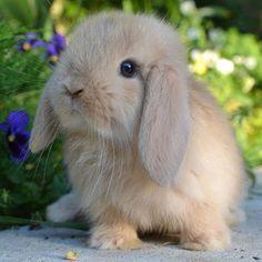 Cute Baby Bunnies, Baby Animals Super Cute, Cute Little Animals, Cute Funny Animals, Cute Bunny Pictures, Baby Animals Pictures, Cute Animal Pictures, The Animals, Fluffy Animals