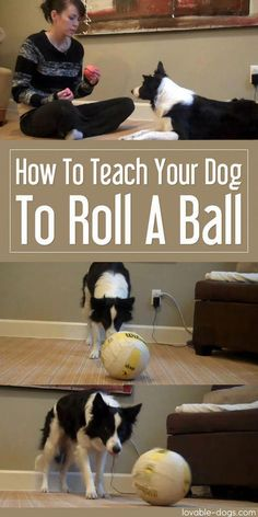 Training your puppy is mostly about building your relationship with your dog as well as implementing boundaries. Be firm but consistent and you will see extraordinary results when it comes to your dog training efforts. Training Your Puppy, Dog Training Tips, Potty Training, Pitbull Training, Training Classes, Training Plan, Dog Training Courses, Agility Training For Dogs, Training Quotes