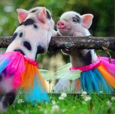 Just piglet things...