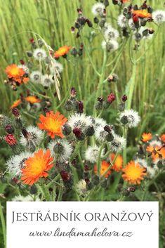 Plants, Honey, Flora, Plant