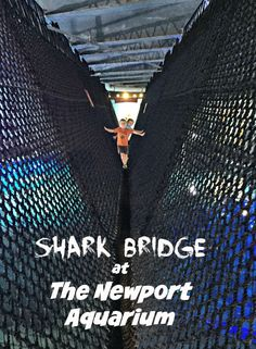 Visit the Shark Brid