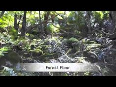 Exploring Life within each of the Rainforest Layers (video and accompanying worksheet)