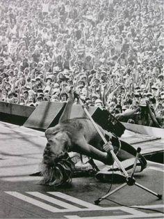 David Lee Roth - Van Halen 80's