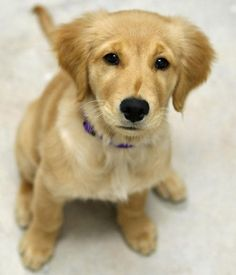 I love goldens. This looks like my pup.