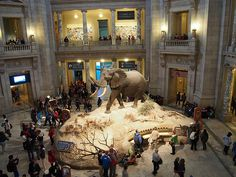 Smithsonian DC - Museum of Natural History