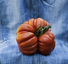 Seminte Rosii Albenga Seeds, Pumpkin, Vegetables, Garden, Flowers, Solar, Food, Pumpkins, Garten