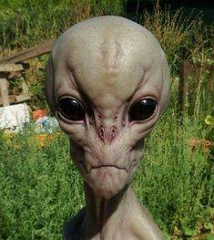 Alien (Grey) books and movies Les Aliens, Aliens And Ufos, Ancient Aliens, Alien Gris, Arte Alien, Alien Concept Art, Alien Abduction, Alien Races, Space Aliens