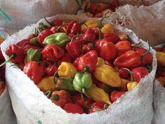 Purée de piments. au Cameroun, on faisait plutôt frire la purée en question avant de la mettre en pot...