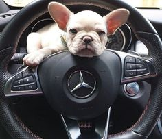 That's how I roll @allurethefrenchie                                                                                                                                                                                 More