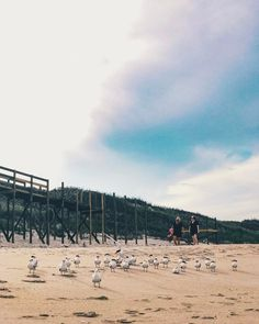 Birds at sea #beach #florida #travel #iphoneography #vscocam