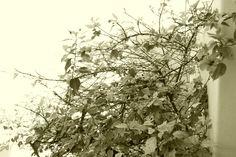 My tree in autum