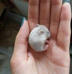 Este filhotinho de 10 dias de idade:   16 bolinhas de pelo que vão aquecer até o coração mais gelado