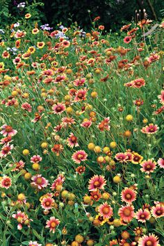 Lantanas laugh at heat and snicker at drought. Tiny flowers in tight clusters that resemble miniature nosegays appear nearly continuously in warm weather. Plus, a la