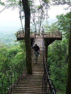 Puente Colgante en la Biosfera del Rio Platano, Honduras