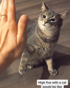 Animal Jokes, Funny Animal Memes, Dog Memes, Funny Animal Videos, Funny Animal Pictures, Funny Cats, Cats Humor, Funny Horses, Animal Pics