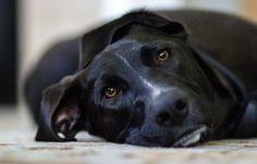 11 Errores Típicos en Fotografía de Mascotas