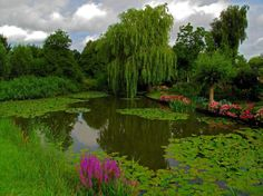 beautiful-pond-1080P-wallpaper-middle-size.jpg (970×727)