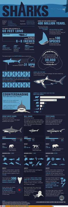 Marine Biology infographic | #sharks #marinebiology #infographic