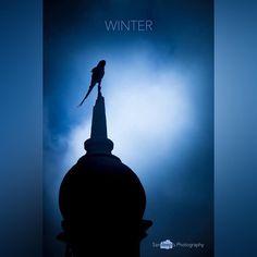 Winter #winter #parakeet #vijayapura #blue #bird #chill #tomb #deepstudio www.deep.studio