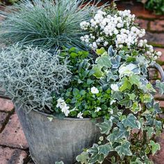 ❄️ Whatever the temperature, these elegant ice maidens make an eye-catching . - Balcony Plants , ❄️ Whatever the temperature, these elegant ice maidens make an eye-catching . ❄️ Whatever the temperature, these elegant ice maidens make an eye-cat. Backyard Garden Landscape, Small Backyard Gardens, Garden Landscaping, Landscaping Ideas, Large Backyard, Winter Planter, Fall Planters, Autumn Planter Ideas, Garden Fire Pit