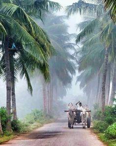 66 Super Ideas for travel photography india Village Photography, Landscape Photography, Nature Photography, Travel Photography, Nature Images, Nature Pictures, Amazing India, Indian Village, Art Village