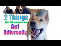 The 2 BIGGEST Things That Will Make Your Dog Act Differently - YouTube