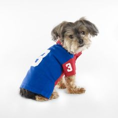 Novelty Dog Polo - For the Pup Home Décor - Ralph Lauren France