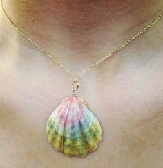 seashell seashell