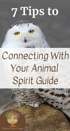 Animal spirit guides are part of awakening to your inner natural world. Find out how to connect with them regularly rainateachings Find Your Spirit Animal, Animal Spirit Guides, Spirit Animal Quiz, Animal Reiki, Spiritual Animal, Psychic Development, Spiritual Development, Doreen Virtue, Animal Meanings