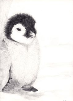 Baby Penguin Drawing by PathofTheAwesomePie on DeviantArt Pencil Drawings Of Animals, Pencil Art Drawings, Animal Sketches, Penguin Sketch, Penguin Art, Pinguin Drawing, Pinguin Illustration, Watercolor Painting Techniques, Baby Drawing