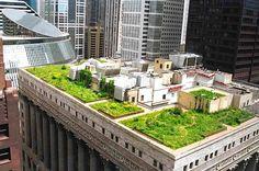 Telhados Verdes - Green Roofs