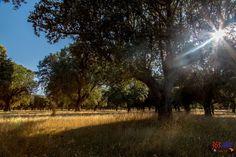 20/365 La Dehesa - Campo Charro