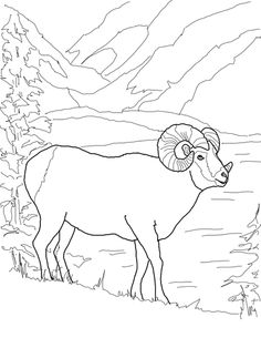 argali mountain sheep coloring page from mouflon category select from 25529 printable crafts of cartoons nature animals bible and many more - Mountain Coloring Pages Printable