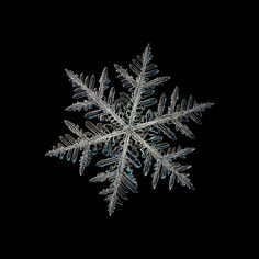 Snowflake picture: Neon (black variant), post-processed snow crystal of fernlike dendrite type with complex structure and many side branches, isolated on black background Snowflake Wallpaper, Snowflake Photos, Snowflakes, Christmas Wallpaper, Nail Designs Pictures, Gel Nail Designs, Artists And Models, Thing 1, Canvas Prints