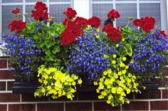 Titkok, amiket sokan nem ismernek: így fognak pompázni a virágaid egész őszig!