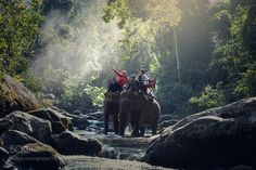 Popular on 500px : Elephant trekking through jungle in northern Laos by SasinTipchai