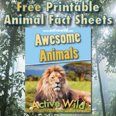 Free Printable Animal Fact Sheets PDF with email sign up