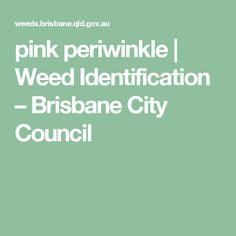 pink periwinkle   Weed Identification – Brisbane City Council