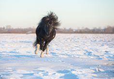 Shetland pony by Victoriya Bondarenko on 500px.