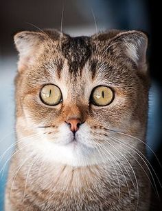 AMAZING !!!!  beautiful Kitty Cat    by          Makeev Photos - 500px.com