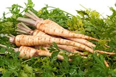 Parsley root steamed, creamed or puréed and you can also boil it. Parsley Roots can also be dried and used for flavoring. Tomato Seedlings, Tomato Seeds, Parsley Plant, La Germination, Fruits And Veggies, Vegetables, Comment Planter, Red Tomato, Growing Seeds