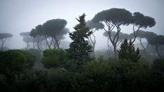 Villa Borghese Park Rome Lazio Italy Italien Reisen Schone Orte Zum