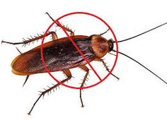 Call @ 9999787571. Don't be late in getting cockroach control inside your home.  Call your nearest Mourier pest control service and ask them to get rid of traumatic, dangerous and dizzy creatures. Protect your home from cockroach attacks.