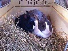Little bunny and big bunny snuggle together - January 16, 2015