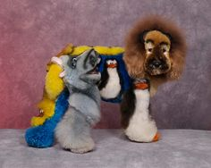 Pets morphed into Yoda, a robot, or weirder — 11 ludicrously groomed dogs...Hilarious!!! Remember - you are looking at REAL dogs - with FUNNY, creative hair cuts!!